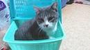 Кот едет из приюта домой и прощается с друзьями