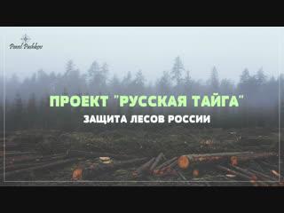 """Проект """"русская тайга"""" - защита лесов россии."""