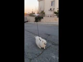 Когда ты на карантине, но выгуливать собаку все равно надо
