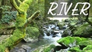 Waterfall Jungle Sounds 5 - Relaxing Tropical Rainforest Nature Sound Singing Birds Ambience