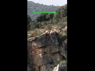 Охота на оленя с гончими