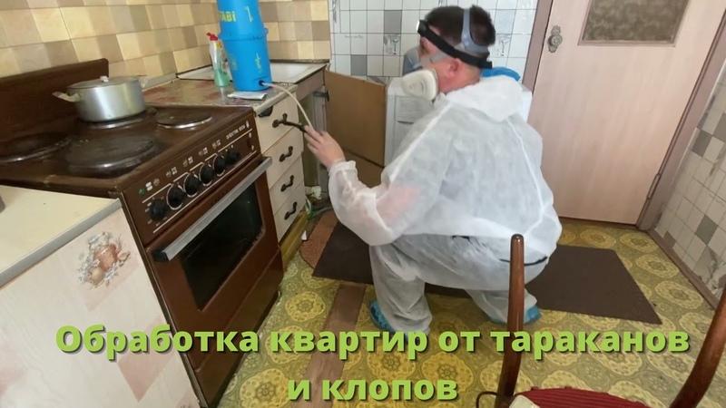 Дезинсекция Дератизация Дезинфекция INDEZ Борьба с клещами короедами тараканами и клопами