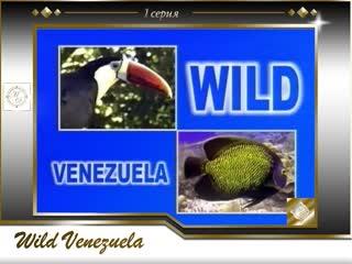 Wild Venezuela 01 / Дикая природа Венесуэлы 1-я серия. Разнообразие птиц