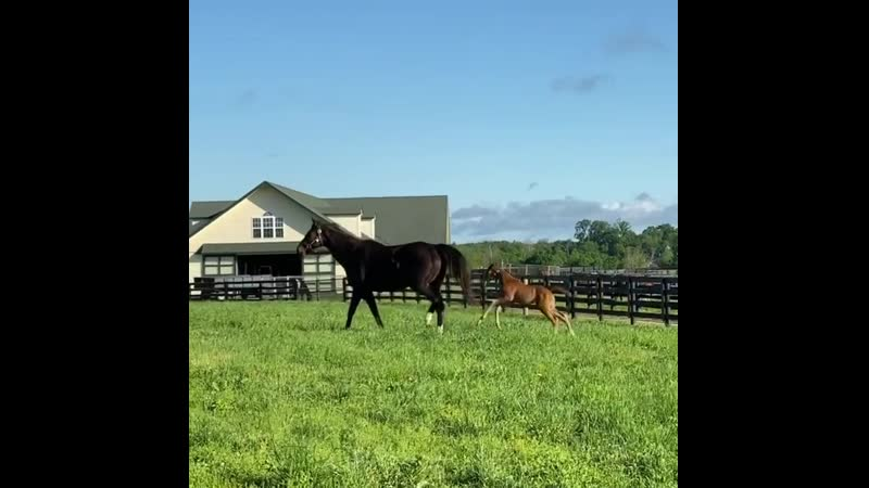 Zenyatta and her Candy Ride filly May 2020