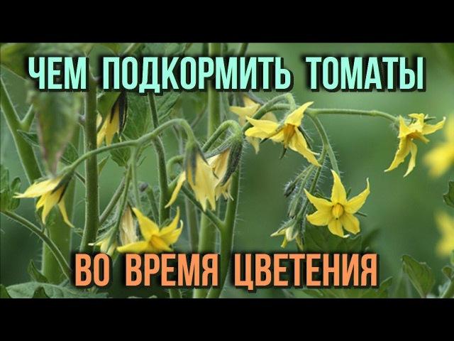Чем подкормить помидоры во время цветения Проверенные способы подкормки томато