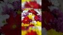 Букет из цветных хризантем и гербер