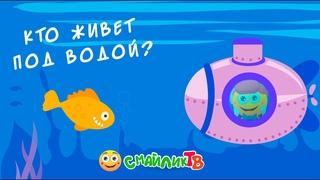 Кто живёт под водой»: тюлени (сезон 1, выпуск 12)