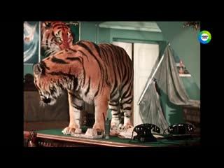 Наше кино. История большой любви  Укротительница тигров (СССР, 1954)