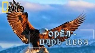 Орёл — царь неба. Мир природы, дикие животные. #Документальный фильм. National Geographic