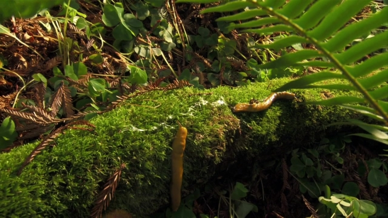National Geographic Дикий запад Золотая лихорадка 2012 1 серия из 3 HD 720