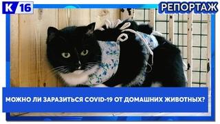 Можно ли заразиться COVID-19 от домашних животных?