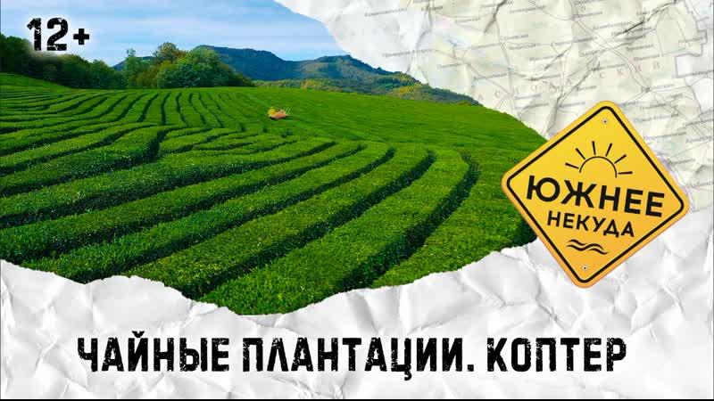 Чайные плантации. Коптер