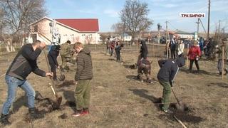 Красногвардейский район принял эстафету международной патриотической акции «Сад памяти»