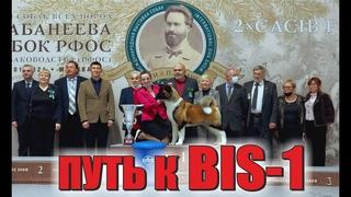 Путь к Best In Show на международной выставке собак памяти Сабанеева /