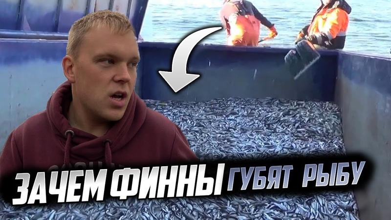 Наш остров Какой биотуалет на острове Почему финны уничтожают рыбу