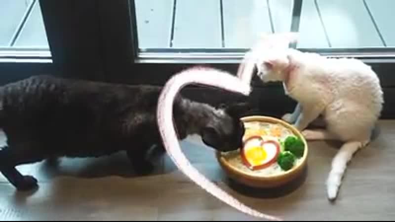 Мисо и Даси готовят угощение ко дню рождения шефа