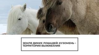 Земля диких лошадей: Кузомень — территория выживания