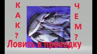 Как ловить рыбу в проводку