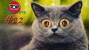 5 МИНУТ СМЕХА/ПРИКОЛЫ 2019/ТОП СМЕШНЫХ ВИДЕО С КОТАМИ/Смешные животные/Смешные кошки/TOP FUNNY PETS