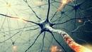 Тайны сознания Бог в нейронах Теория Всего от Athene