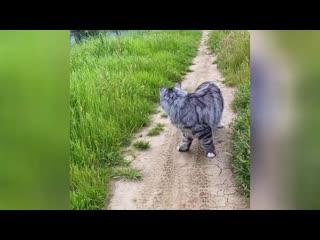 Любопытный кот следить за добычей