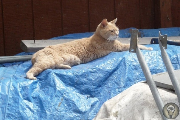 Знаменитый кот-мэр из Аляски умер в возрасте 20 лет. Стаббс, почетный мэр Талкитны (штат Аляска), любимец местных жителей и туристов, скончался в возрасте 20 лет. По словам хозяев кота, он умер