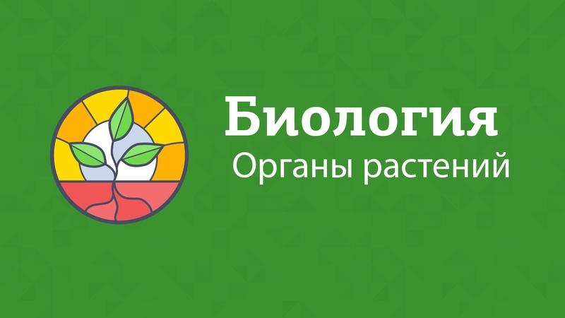Биология |Подготовка к ЕГЭ 2017 | Органы растений
