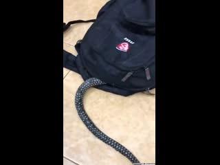 Змея залезла в портфель ПРИКОЛЫ 2020!!!