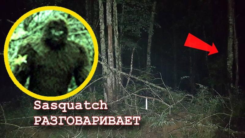 УДАЛОСЬ ПОГОВОРИТЬ СО СНЕЖНЫМ ЧЕЛОВЕКОМ Лесные мифические существа снятые на камеру это БИГФУТ