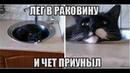 Веселые картинки. Приколы про кошек смешные.