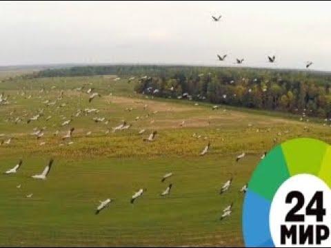 Перелетные птицы Миллион вопросов о природе