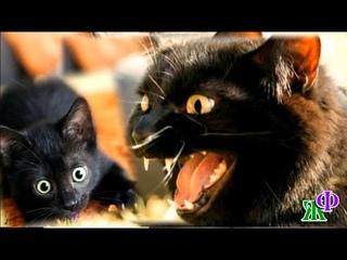 Сатана 11 «Я хочу, чтобы вы стали НАСТОЯЩИМИ котами!» – грозно сказал Сатана