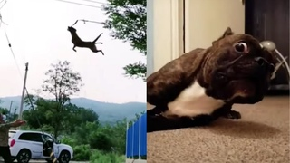 Funny Cat and Dog Videos That Will Make You Die Inside | Pets Reactions