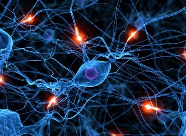 «Нервные клетки не восстанавливаются»  фраза, которую многие из нас слышали