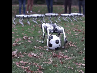 Роботы-собаки играют в футбол