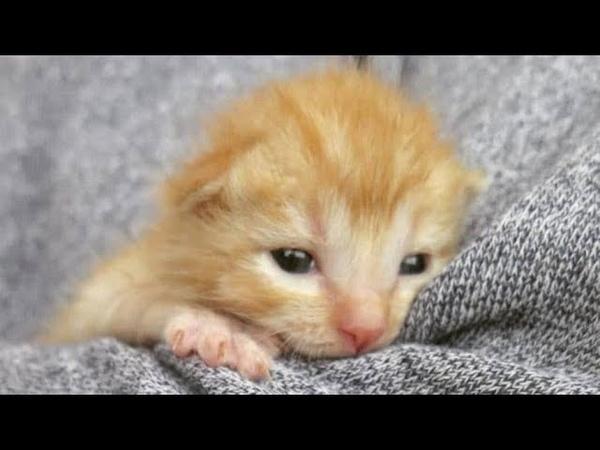 Кошка кукушка бросила пятерых котят в гараже Они плакали и пытались ползти в надежде на спасение