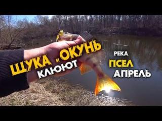 ЩУКА и ОКУНЬ КЛЮЮТ в НАЧАЛЕ АПРЕЛЯ на реке ПСЕЛ / ЭТА ПРИМАНКА КОСИТ РЫБУ / СПИННИНГ