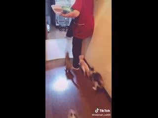 Когда котики хотят ЖРАТЬ