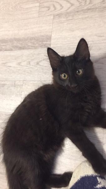 Котёнок 3 месяца,мальчик,к лотку приучен,самостоятельный,умный малыш.Т