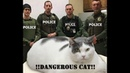 🐈Опасно смешные кошки! Подборка приколов с котами и кошками!