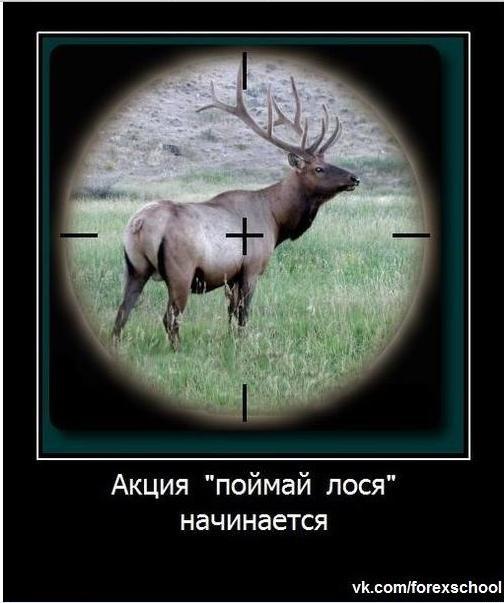 Анекдот Про Лося И Охотника