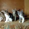 Пропавшие и найденные животные Краснодар