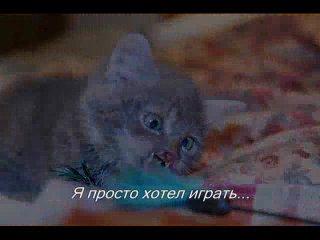 Бедный котёнок:((((((((((((