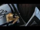 Ведьмы страны Оз The Witches of Oz (2011) DVDRip