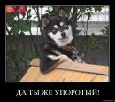 Фотоальбом Андрюхи Штиленко