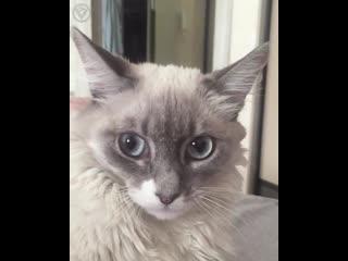 Котик просто в шоке