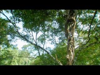 Discovery Экватор Серия 1 Южная Азия Борьба за свет