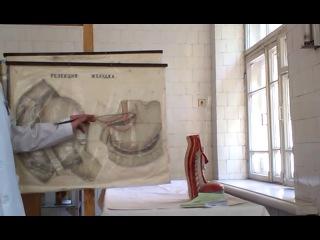 занятие 15 шлунок гастростомія