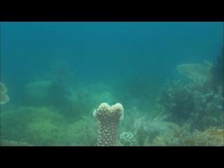 Discovery Экватор Серия 5 Индийский океан Битва за свет