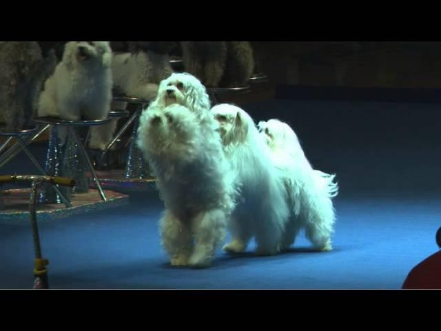 Olate Dogs NBA Halftime Show